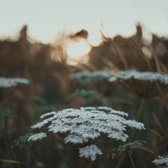 beautiful-blurred-background-delicate-2792903
